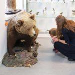 Täytetty karhu Terranova näyttelyssä